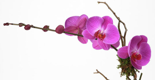 1-a-close-up-of-an-orchid-branch-nicholas-eveleigh